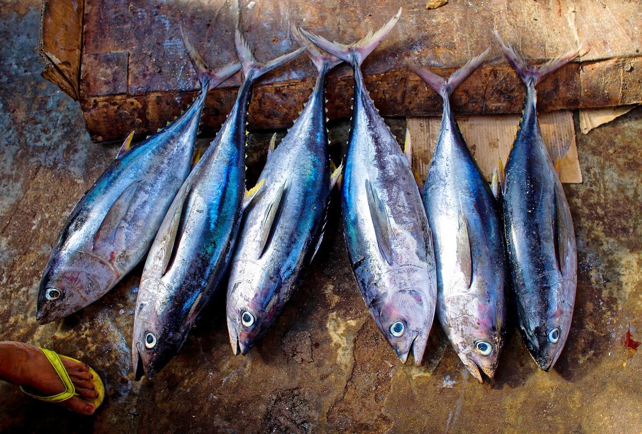 come riconoscere il tonno fresco