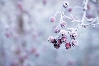salute di inverno, frutta e verdura