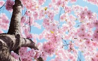 salute in primavera , frutta e verdura